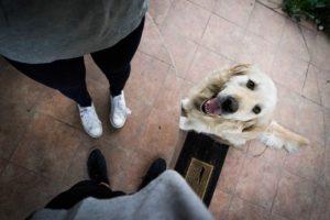 http://caninecoiffur.ca/wp-content/uploads/2017/12/qtq50-sPtzPB-300x200.jpeg